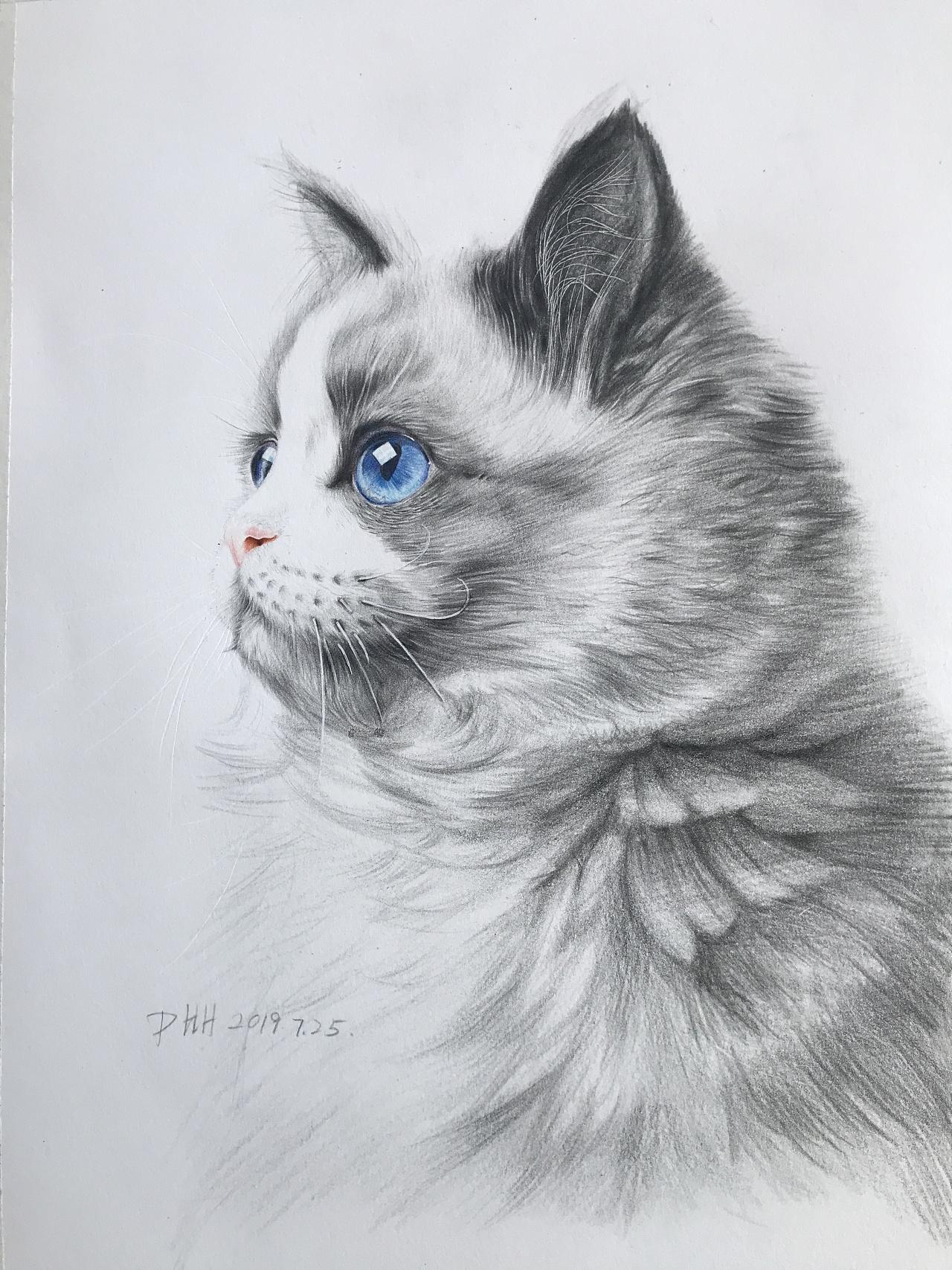可爱彩铅_可爱猫咪|纯艺术|彩铅|婳画 - 原创作品 - 站酷 (ZCOOL)