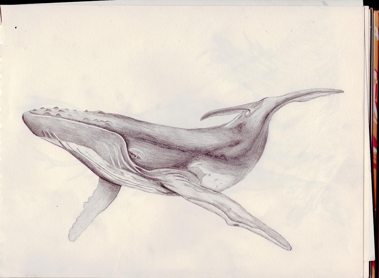 鲸鱼的外部结构图