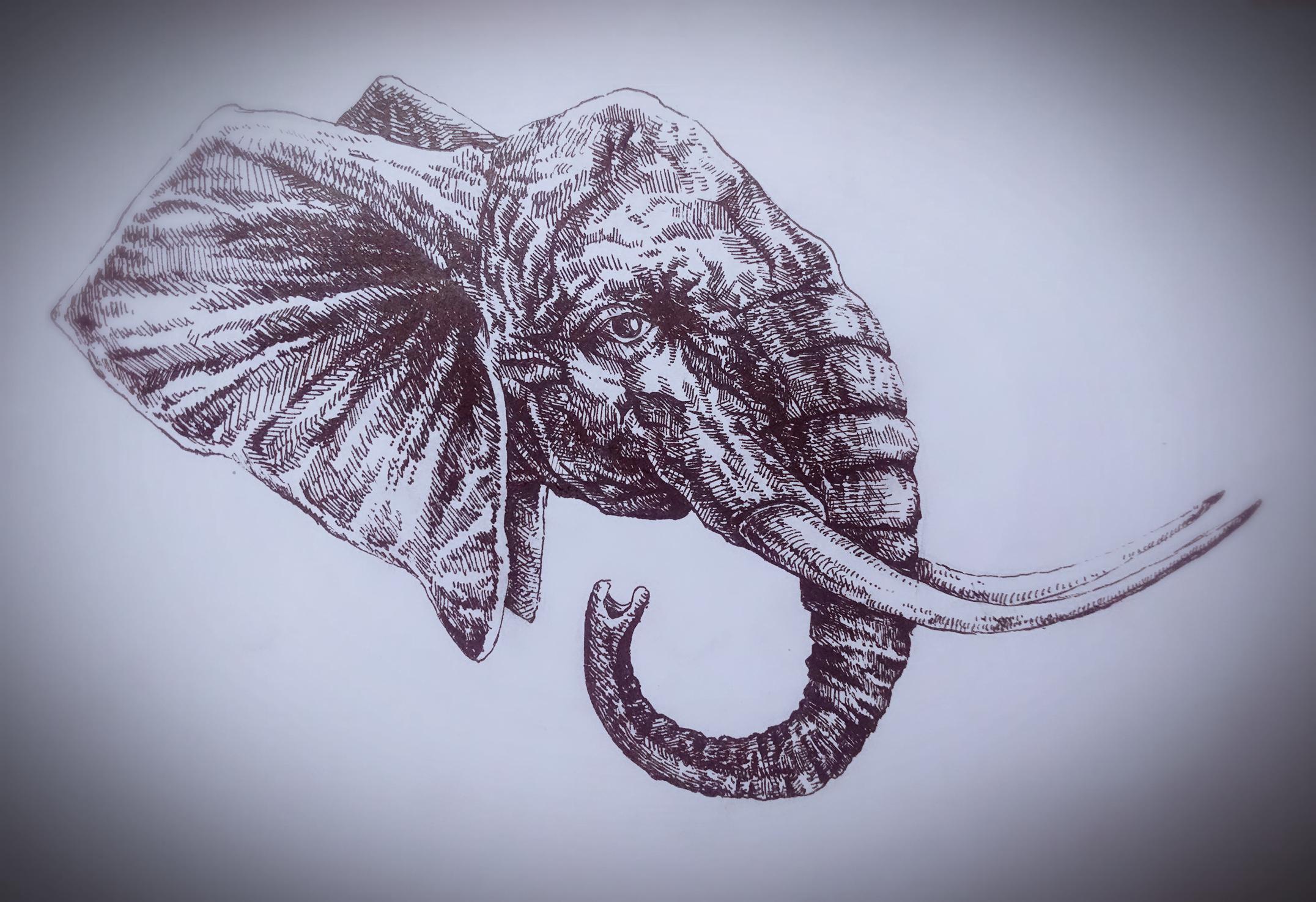 黑白动物|插画|插画习作|ak思琦 - 原创作品 - 站酷