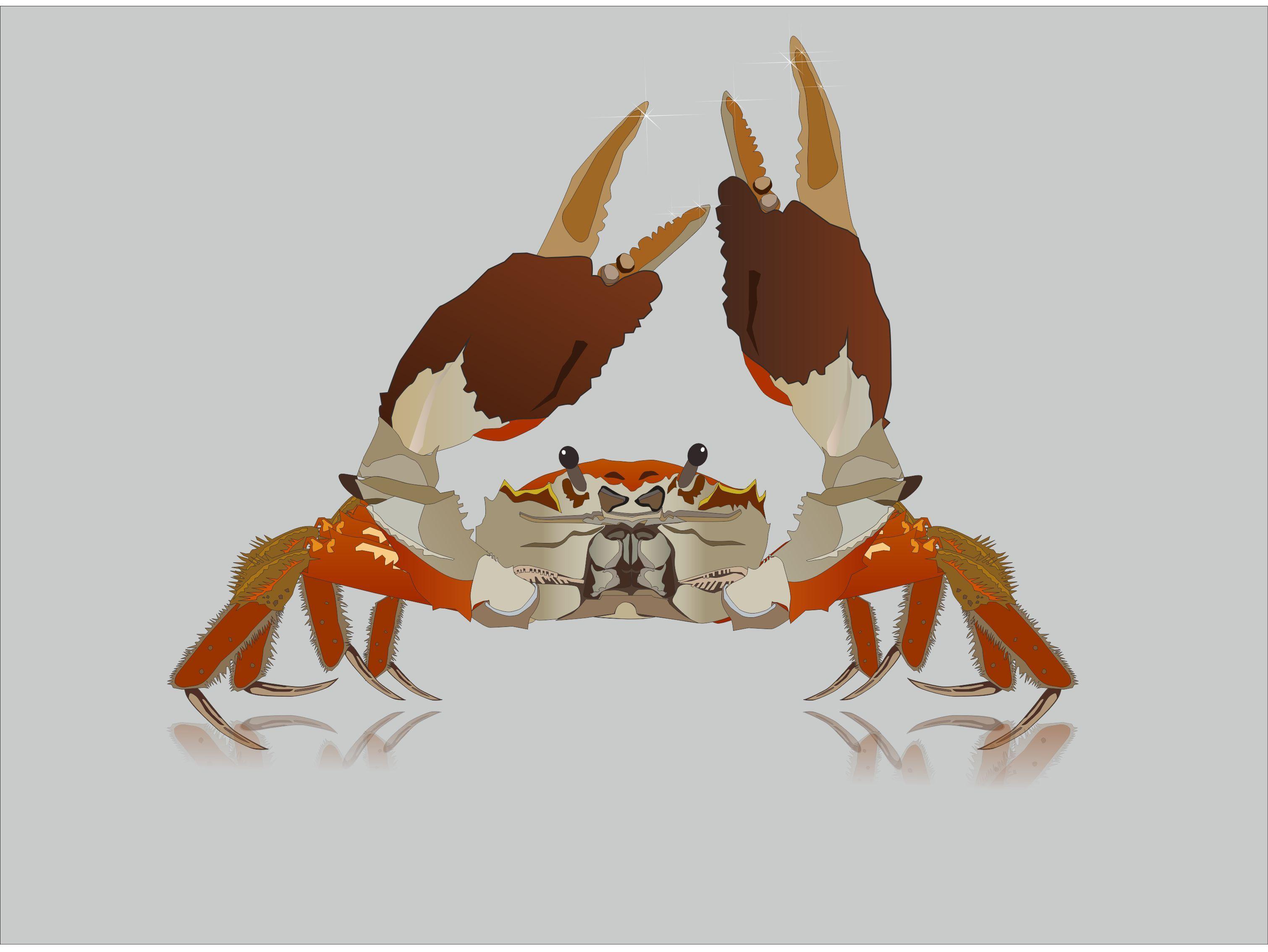 布料螃蟹手工制作大全