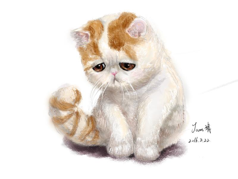 猫手绘|涂鸦/潮流|插画|joan靖
