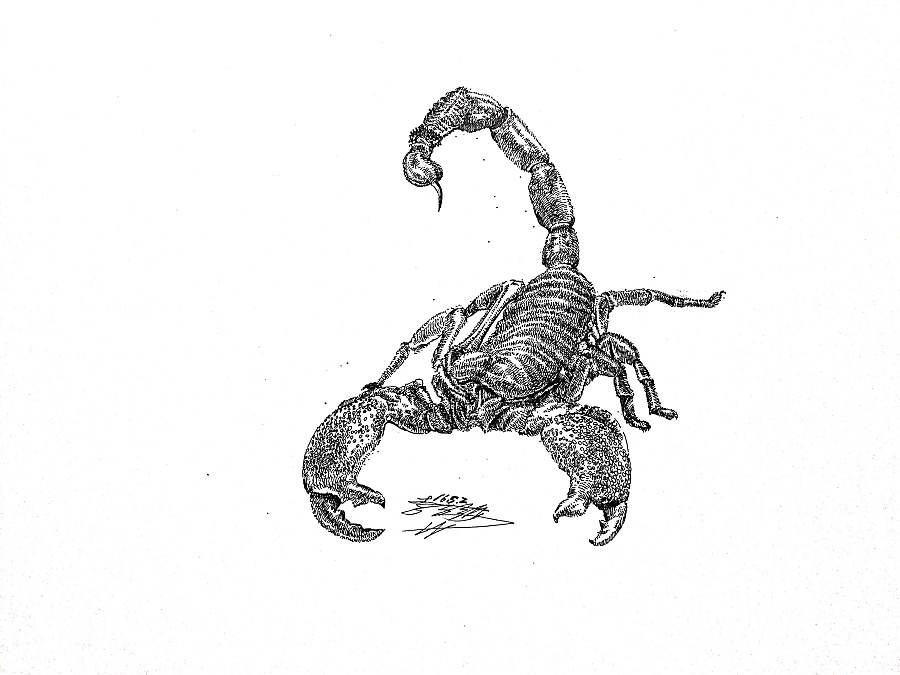 蝎子手绘卡通图片