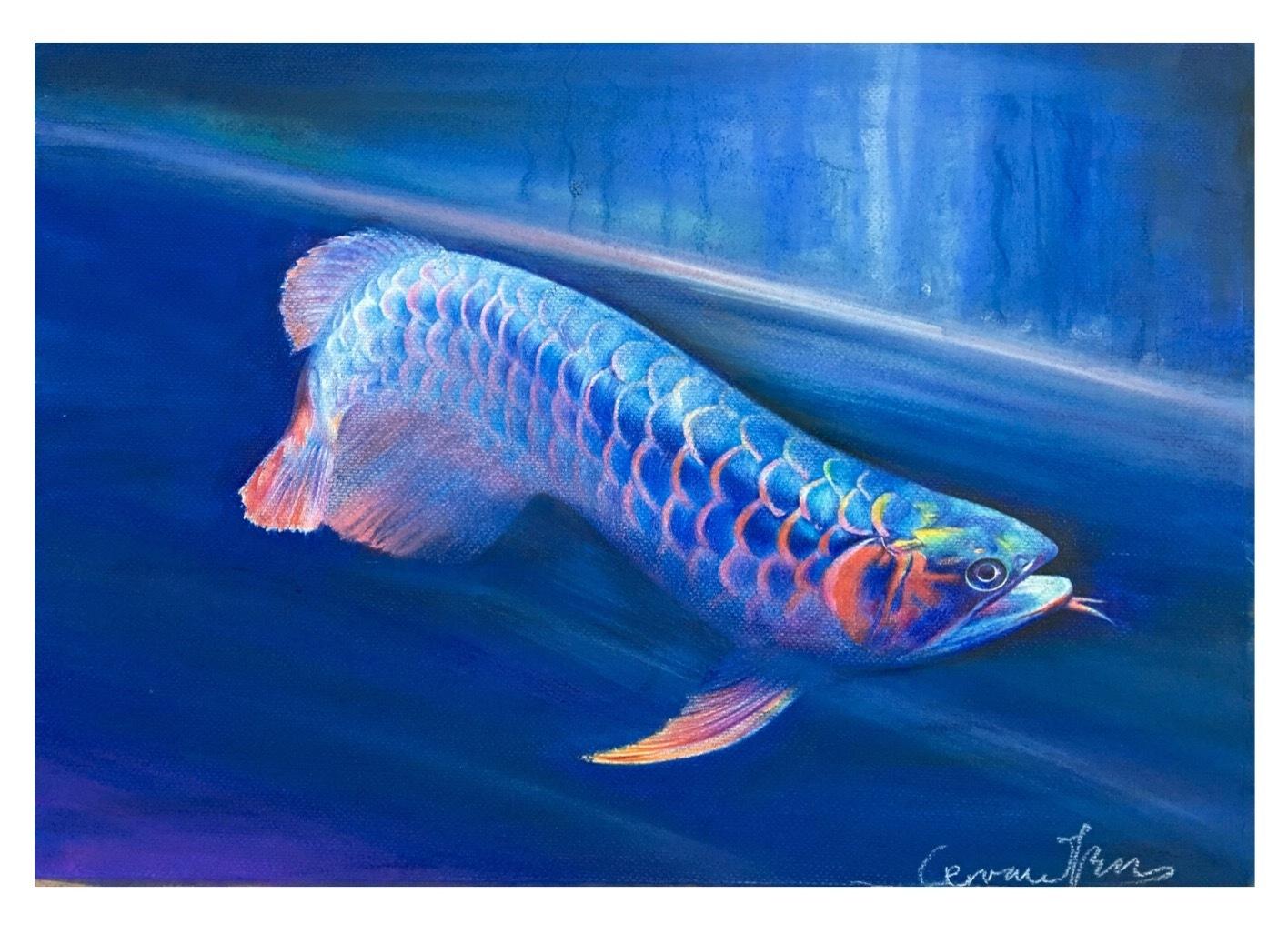 龙鱼简单又漂亮手绘
