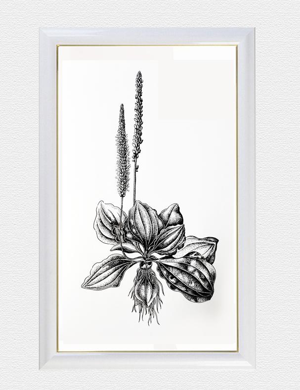 针管笔手绘作品|绘画习作|插画|言小粒 - 原创设计