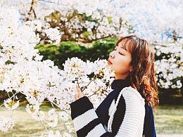 来年も桜を見に行こう