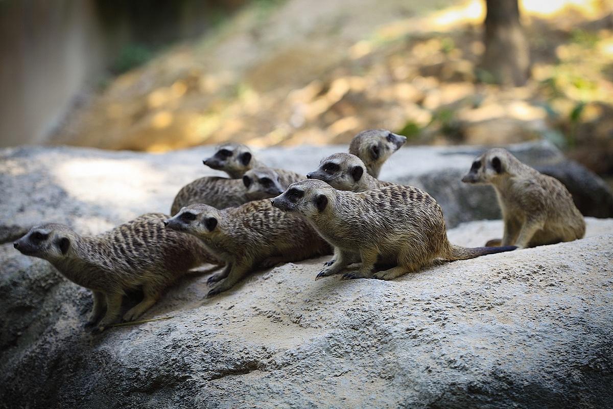 长隆动物园随拍