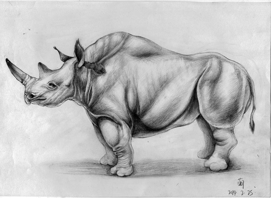 素描画动物犀牛