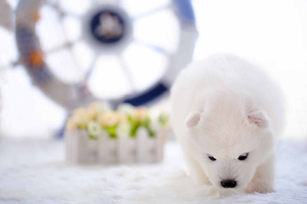 【宠爱宠拍】北极熊幼崽|摄影|动物|l784028626