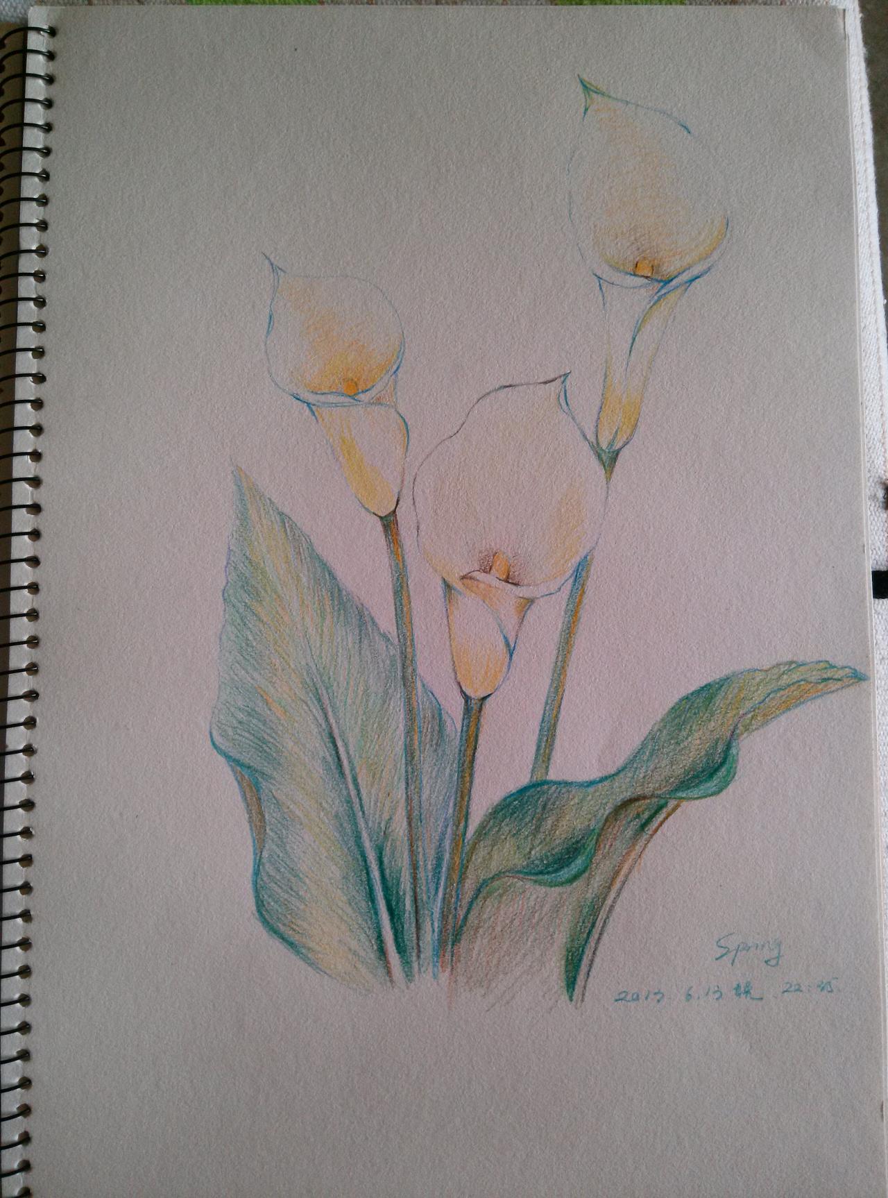 植物临摹2-水溶性彩铅|纯艺术|彩铅|mmspring图片