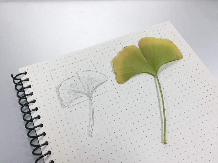 百图斩11——【手绘】银杏叶子|绘画习作|插画|beans