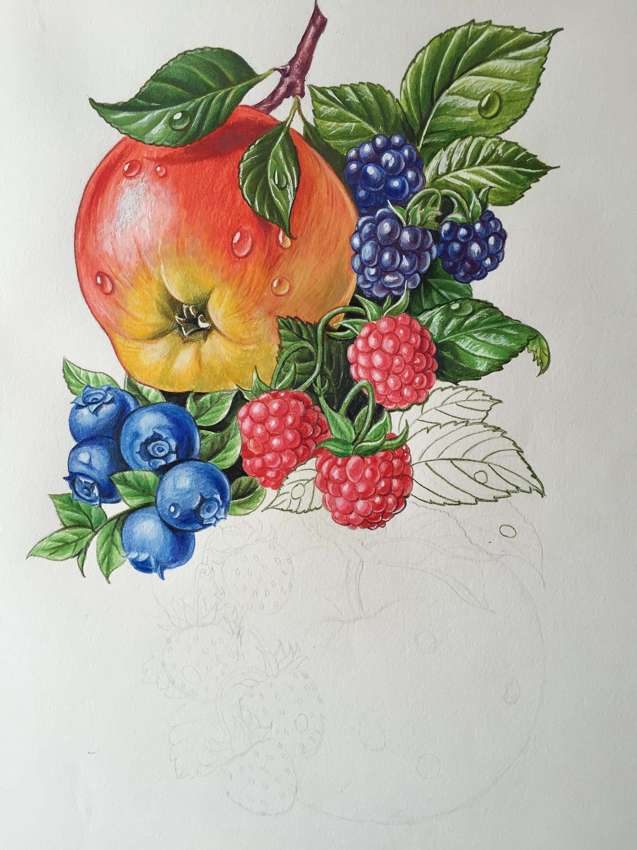 彩铅水果组合图片