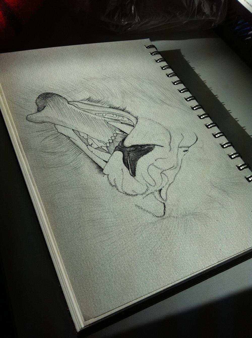 钱包设计图手绘