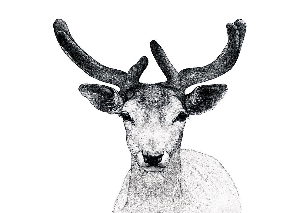 us,温和动物系列,硬笔手绘