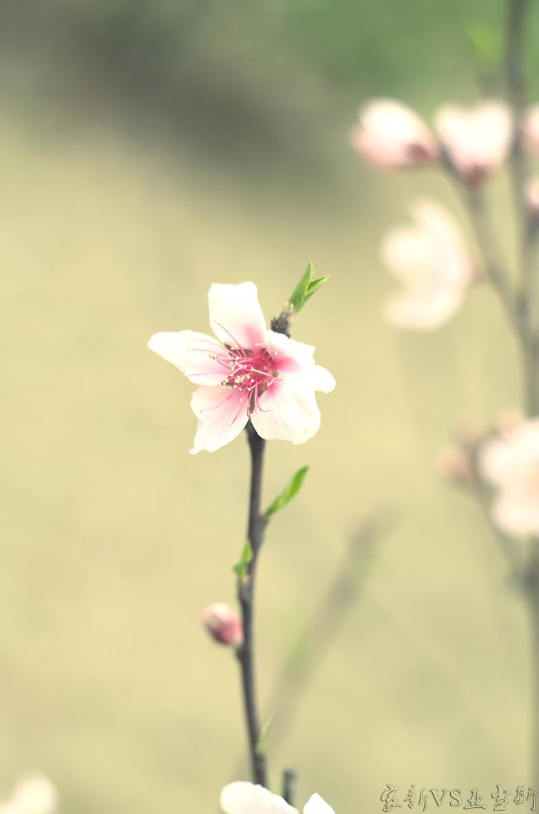 各种花卉图片