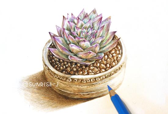 【@sunrise-j】彩铅手绘多肉植物