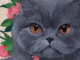 【五彩斑斓的喵星球】-CatCastleD.Z 2019年度合集