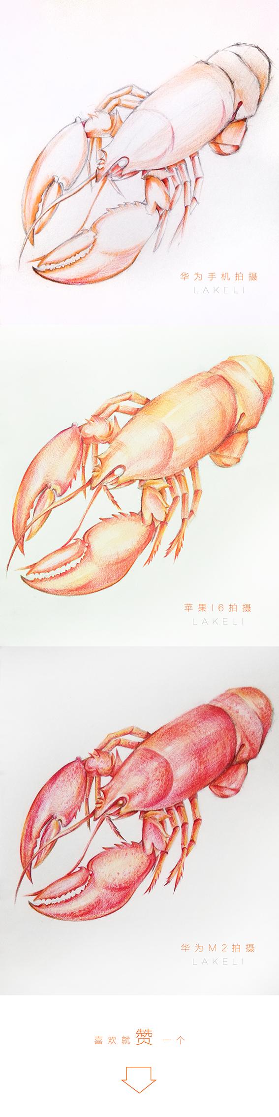 (原创)手绘小龙虾