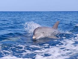 蓝色 海豚