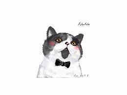 猫咪 - 喵星人