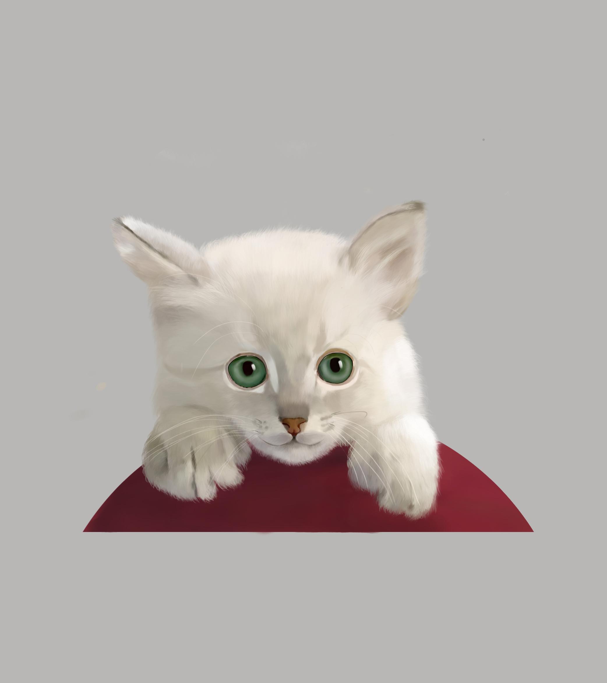 壁纸 动物 狗 狗狗 猫 猫咪 小猫 桌面 2084_2343