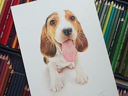 彩铅画《狗》