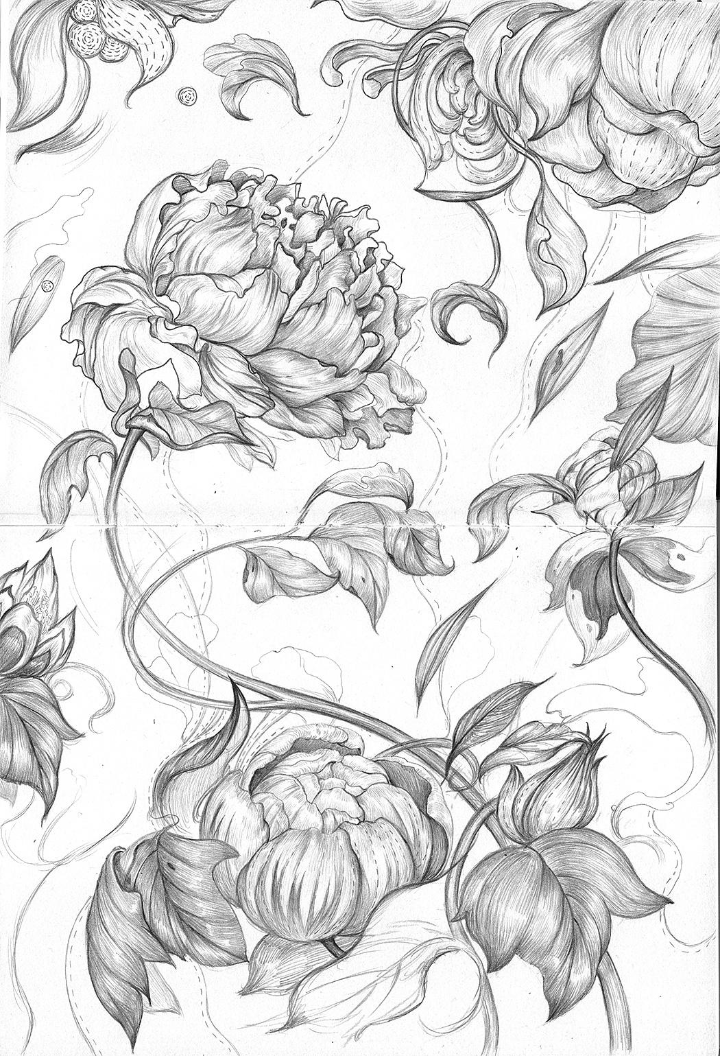 一些关于植物类的手绘插画