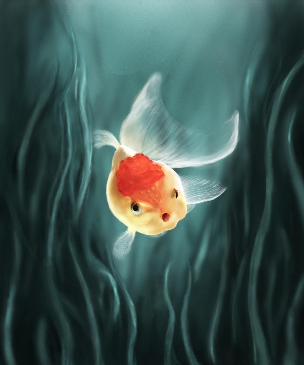美是自由的象征_鱼儿自由自在的象征,我也希望自己也可以
