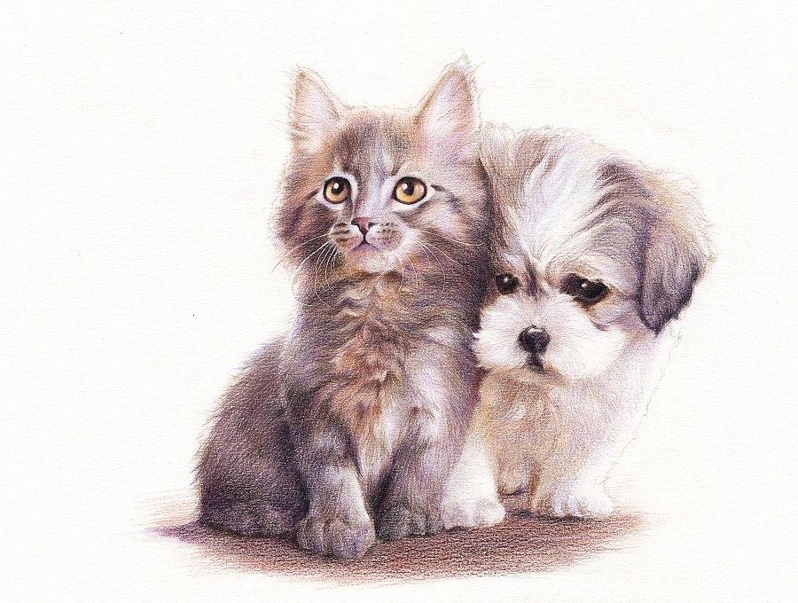 猫和狗有什么区别图片