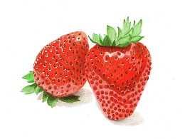 【驴大萌彩铅教程248】手绘24节气水果图鉴 惊蛰草莓