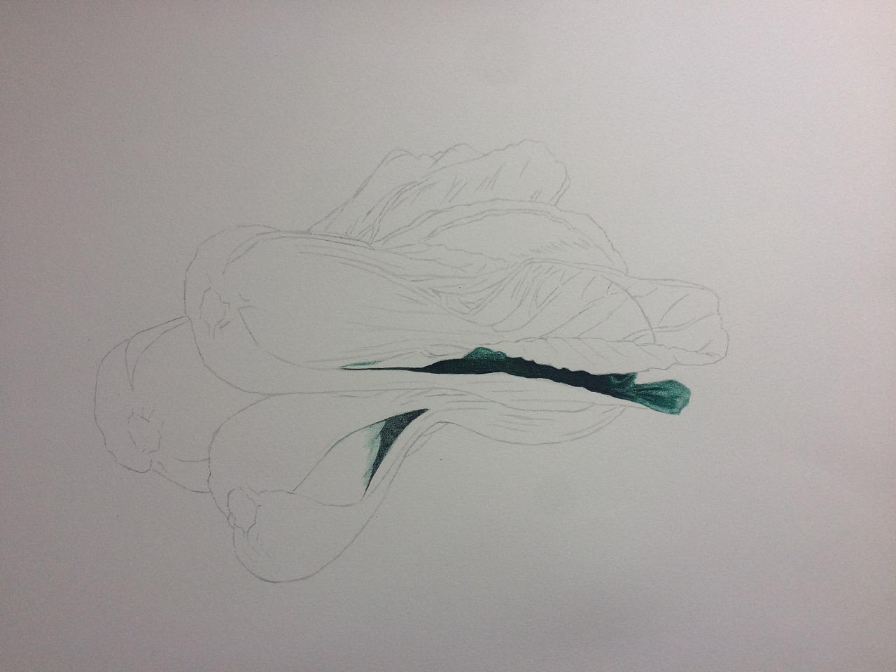 彩铅--三棵青菜