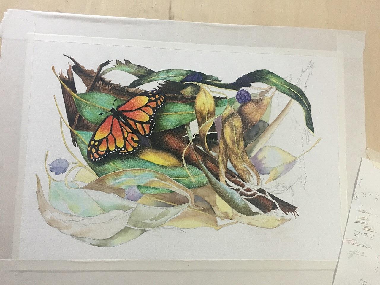 zimoo手绘彩铅——田园&蝴蝶
