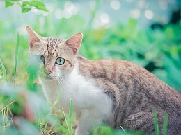 寻猫集49