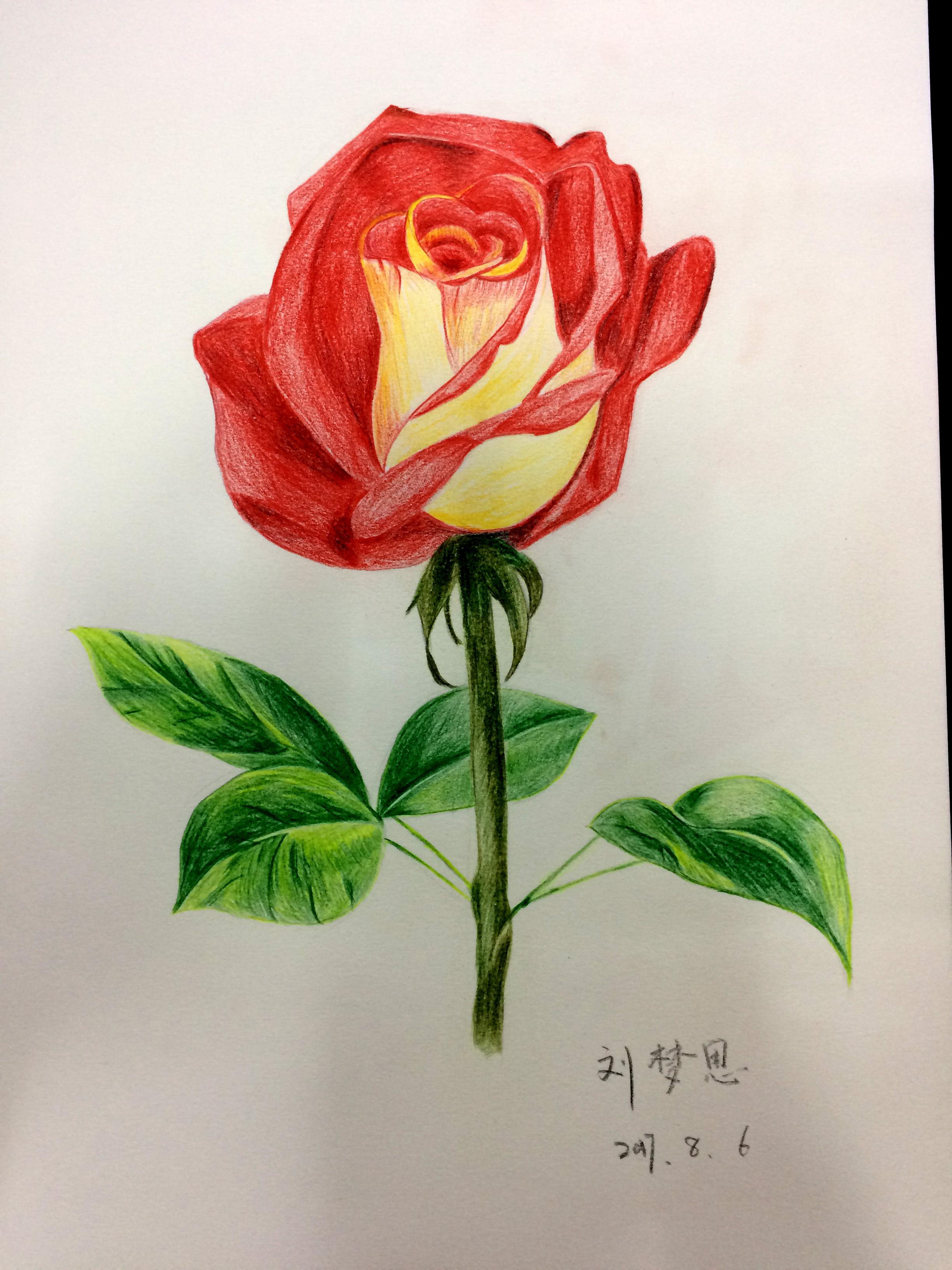 手绘玫瑰|纯艺术|彩铅|nffw - 原创作品 - 站酷