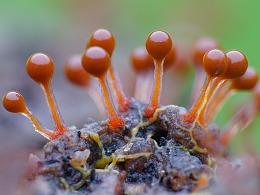 美丽的【黏菌】微观视觉