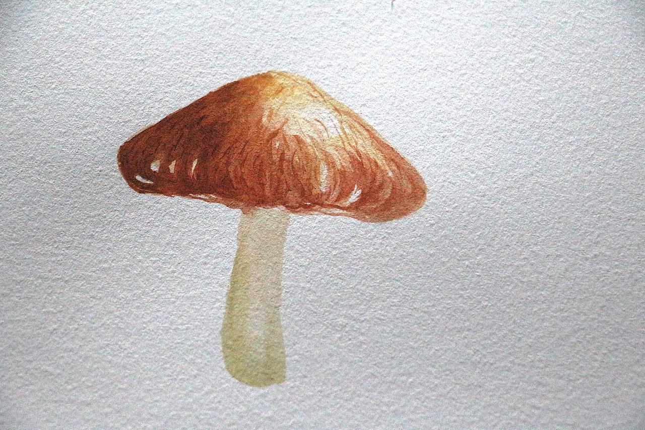 手绘水彩香菇