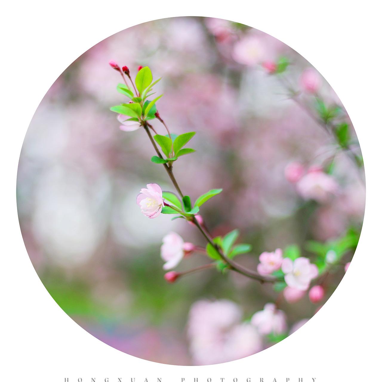 花开如云 葫芦丝谱子