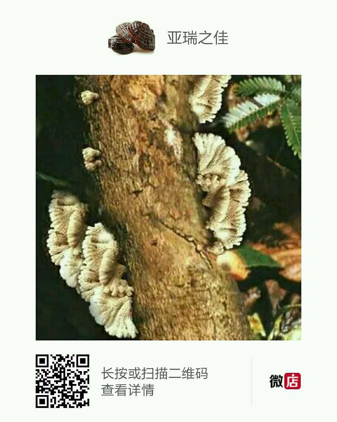 土特产|视频|PPT/v视频|亚瑞之佳土特产店-原创平面桂林旅游图片