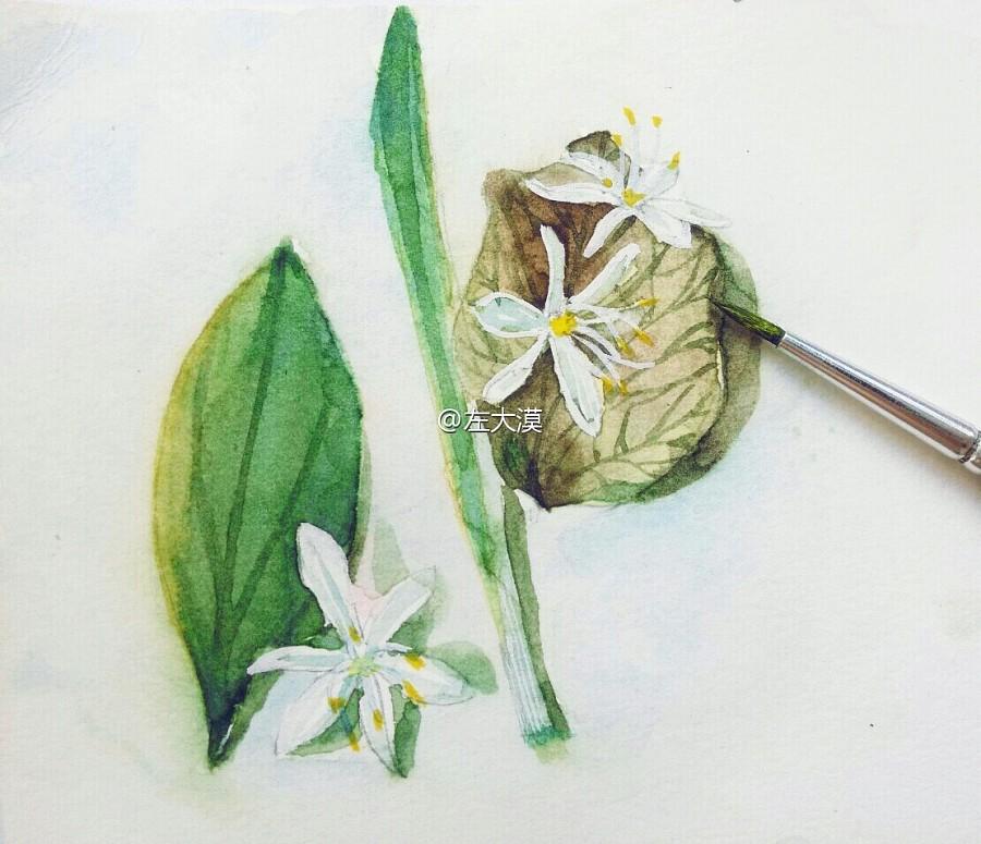 植物水彩手绘|涂鸦/潮流|插画|不语世 - 原创设计作品