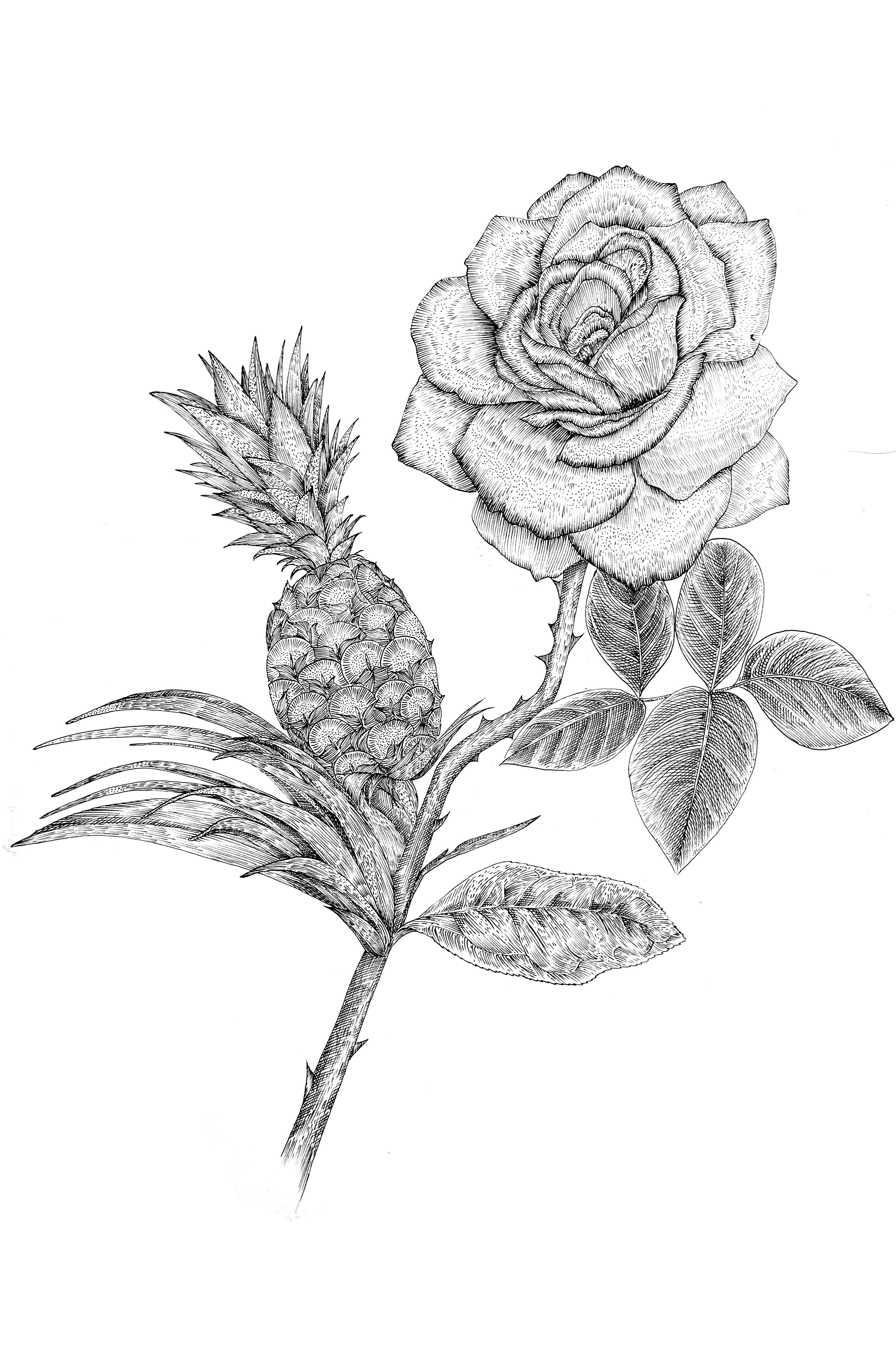 植物插画|插画|商业插画|猫夫人2016 - 原创作品
