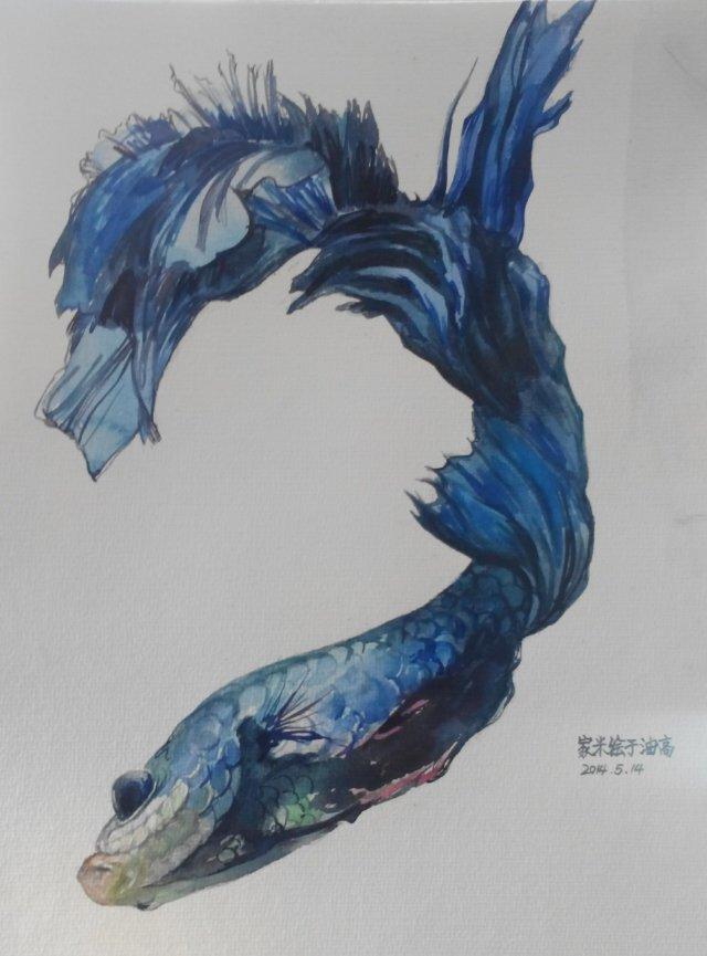内射粉嫩蝎鱼_原创作品:水彩 鱼 2