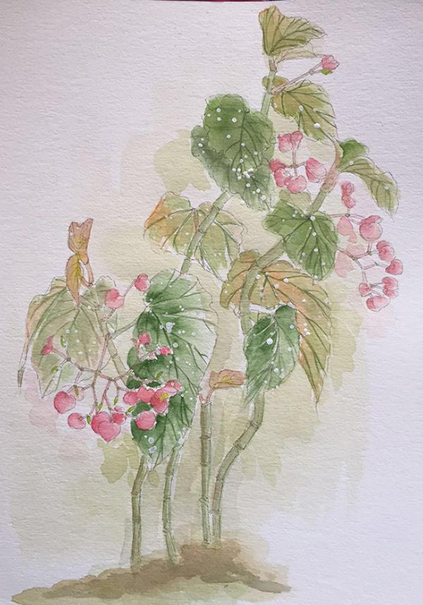 水彩手绘《海棠花》二