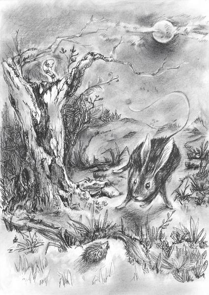 炭笔手绘小鸟图片