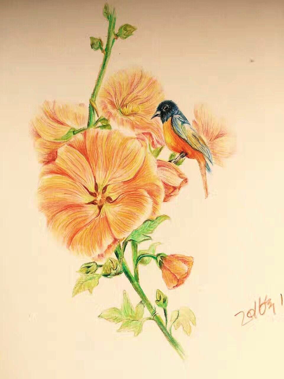 彩铅植物花鸟
