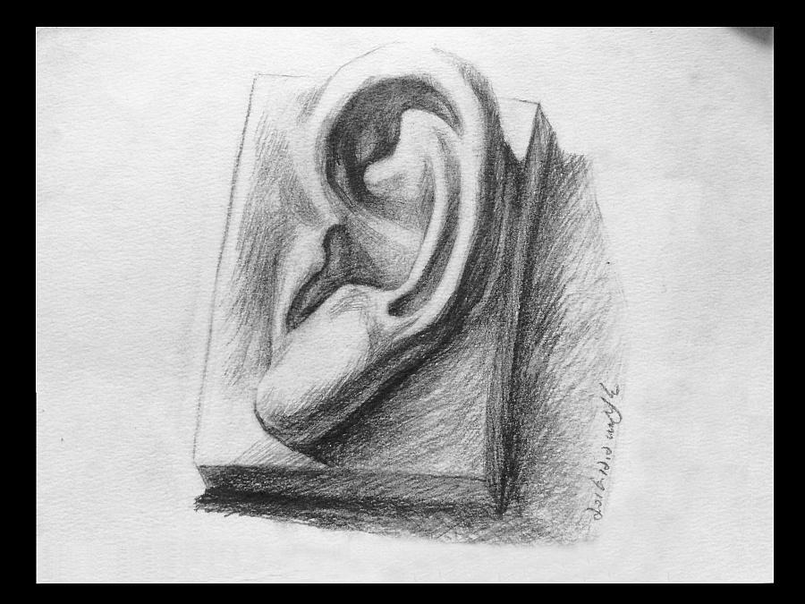石膏耳朵|素描|纯艺术|吴银花 - 原创设计作品 - 站酷 (ZCOOL)