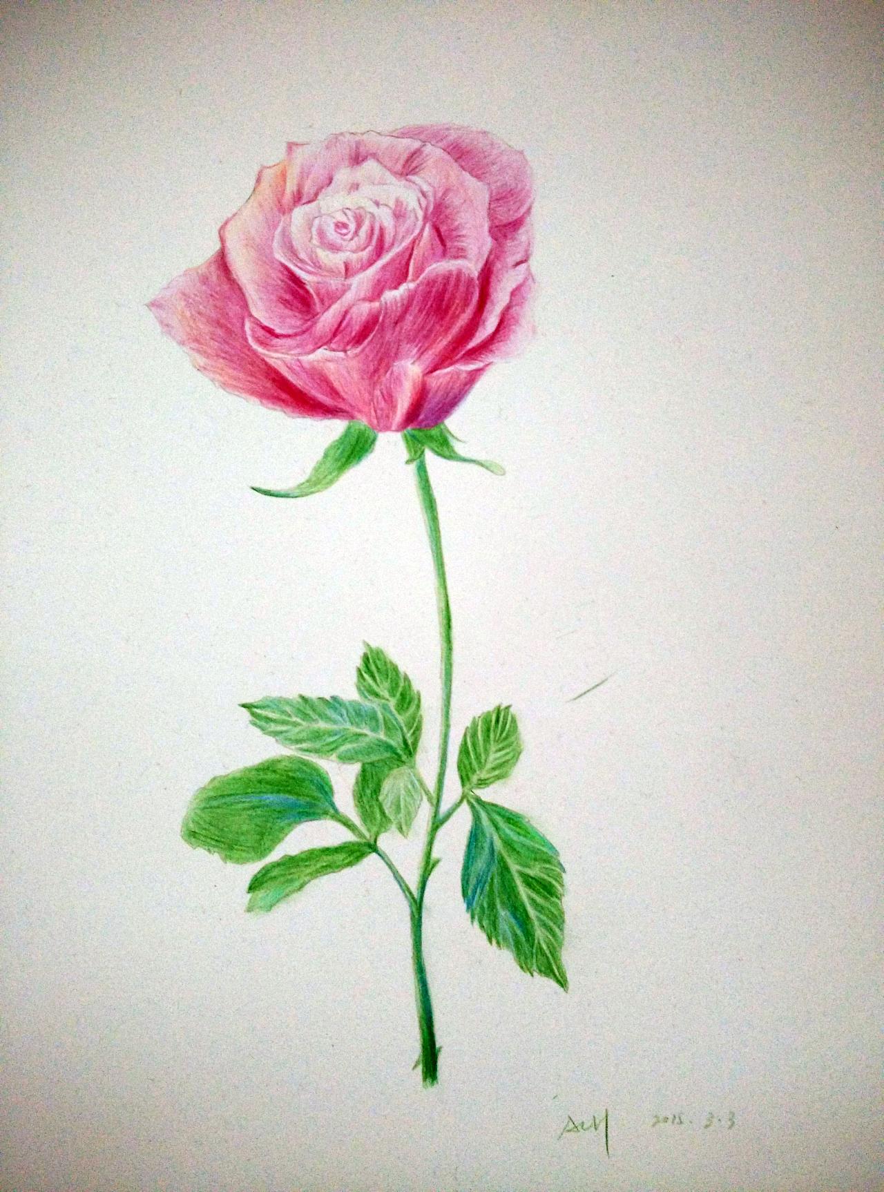 彩铅花_彩铅画玫瑰的图片大全 _排行榜大全