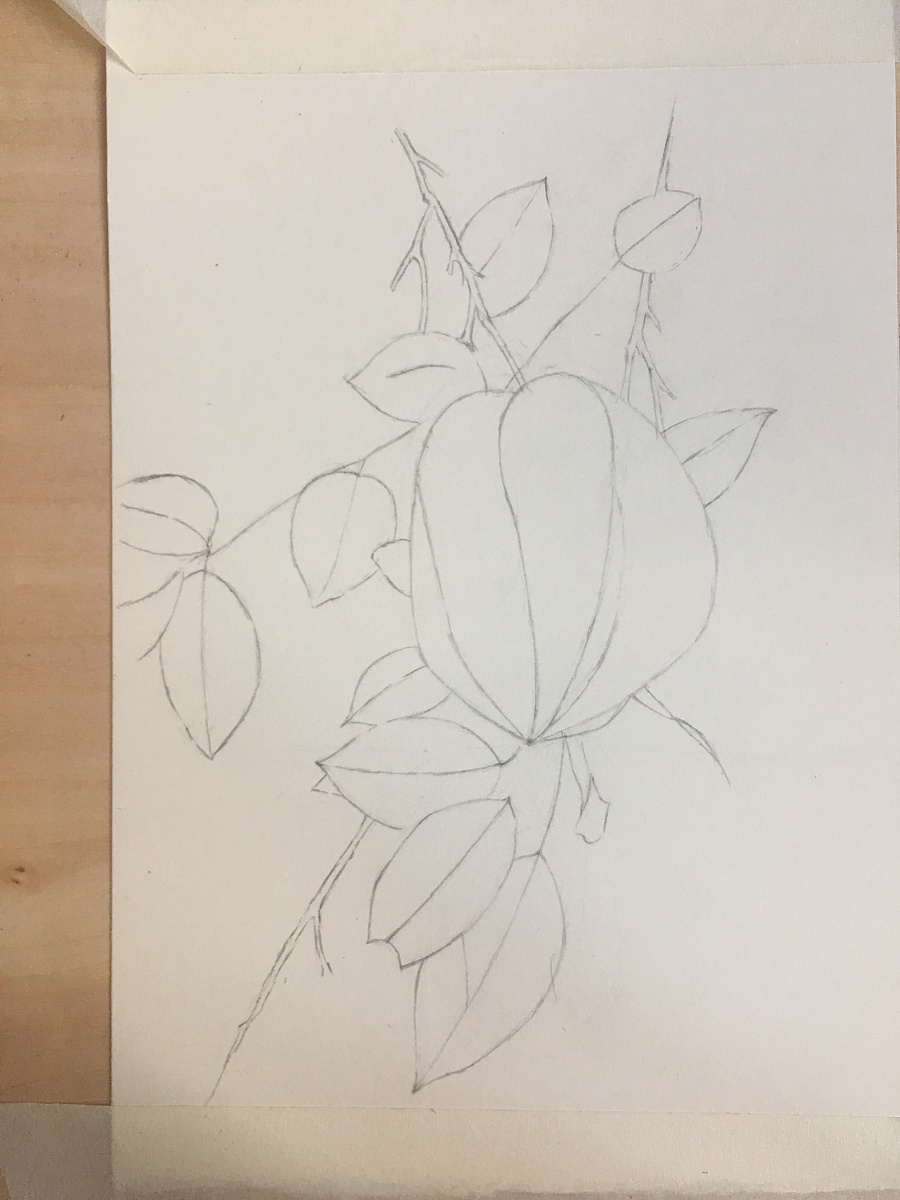 彩铅手绘|彩铅|纯艺术|柚子的橘猫 - 原创设计作品