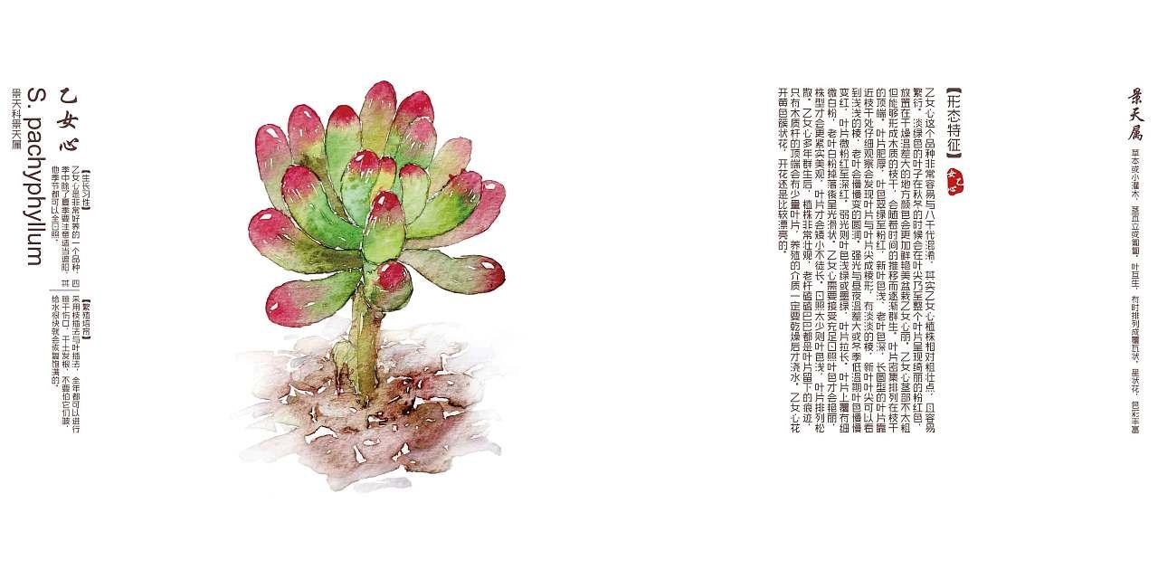 多肉植物画记