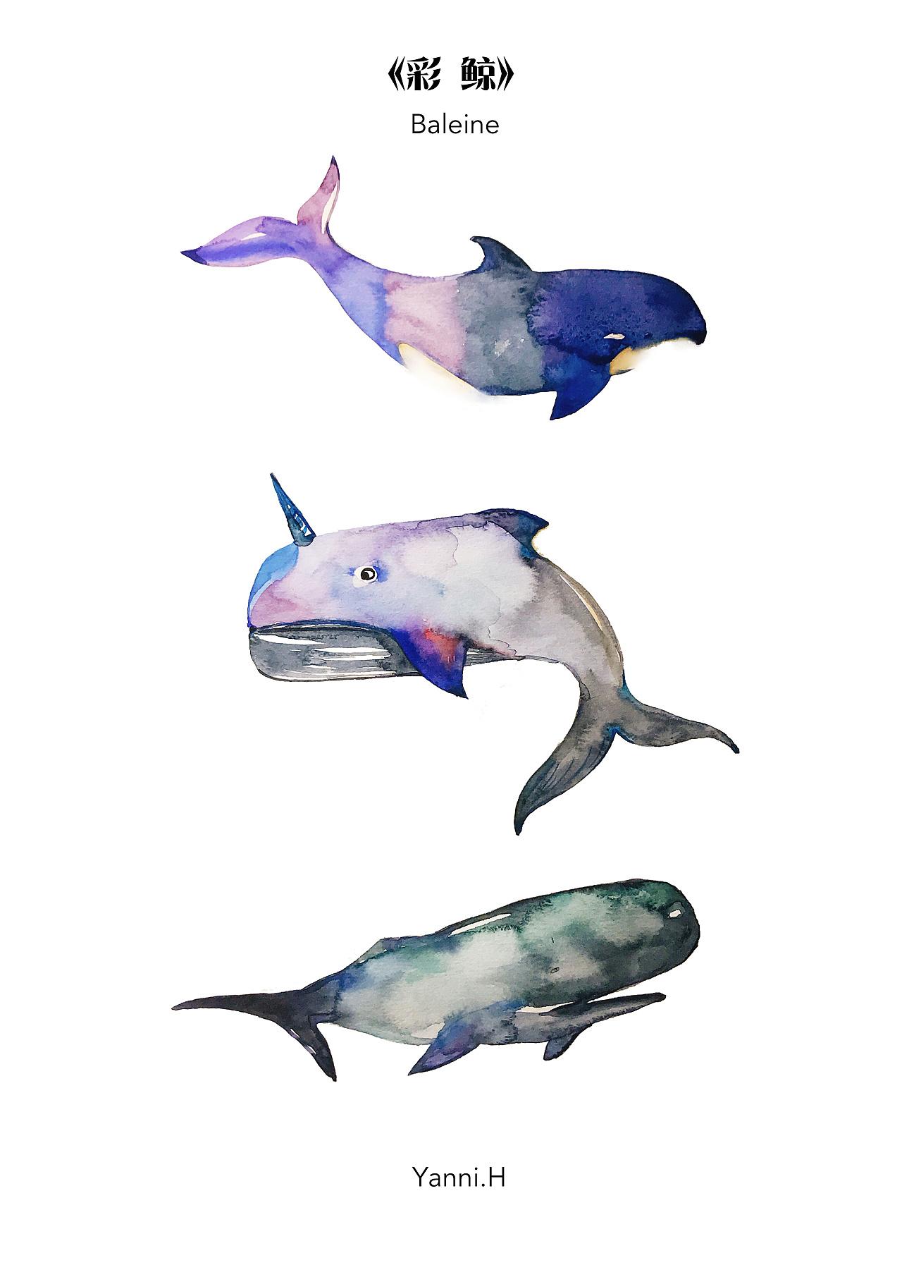 鲸鱼碳素笔手绘