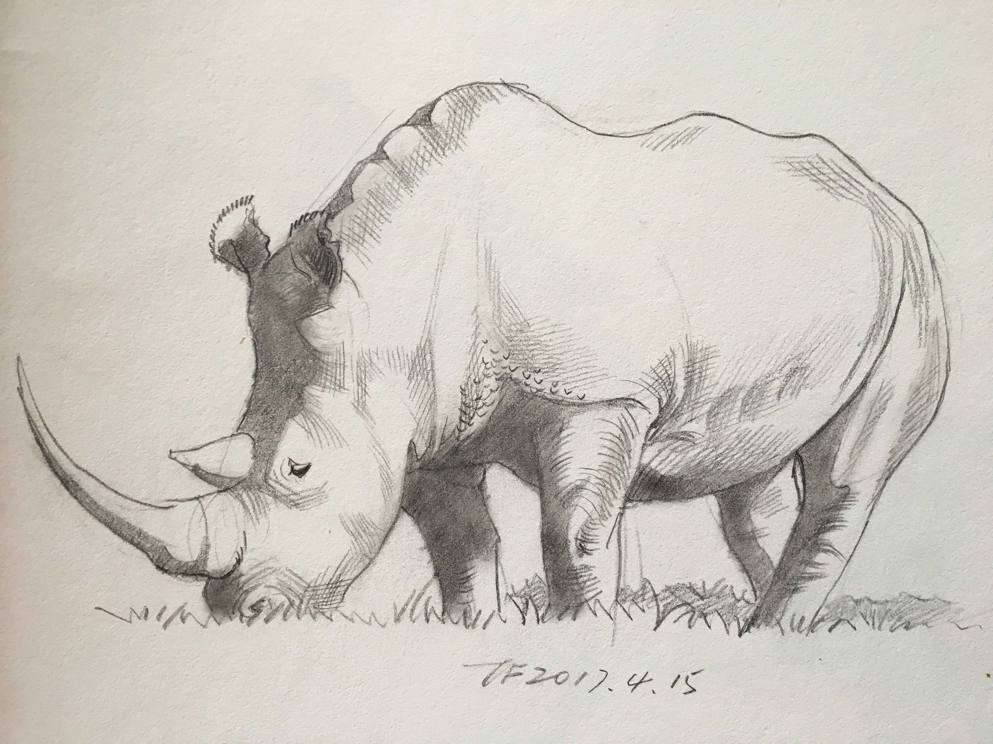 铅笔画——动物篇