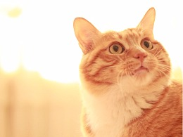 小房有猫叫木瓜